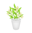 Beautiful Ylang Ylang Flowers in A Flower Pot vector image vector image