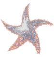 Color Grunge Original Star vector image vector image