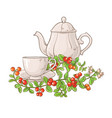cranberry tea vector image