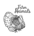 Isolated sketc farm turkey on a white background vector image vector image
