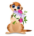 meerkat with a bouquet of flowers isolated on vector image