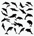 silhouettes dolphin vector image