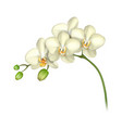white orchid realistic transparent background vector image vector image