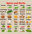 set spices and herbs for cooking vector image vector image