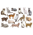 16 hand drawn cat breeds vector image