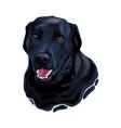 black labrador retriever dog head vector image vector image