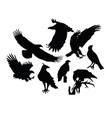 eagle bird silhouettes vector image