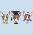set bullterrier dogs vector image vector image