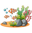 clownfish swimming on white background vector image vector image