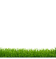 grass border white background vector image vector image