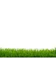 grass border white background vector image