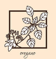 hand drawn oregano vector image
