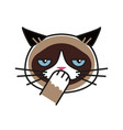 shy grumpy cat meme cat isolated white background vector image vector image