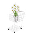 Beautiful Fresh Chamomile in A Shopping Cart vector image vector image