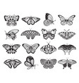 butterfly silhouette set wildlife ornament vector image