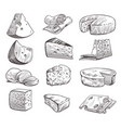 sketch cheese various types cheeses fresh vector image vector image