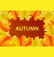 autumnal leaf of oak vector image vector image