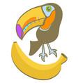babana toucan vector image
