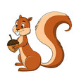 cartoon drawing of a squirrel vector image