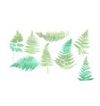 close up 8 leaf fern isolated on white background vector image