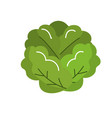 delicious and health lettuce vegetable vector image vector image
