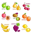 Set of stylized fresh fruits on white background vector image vector image