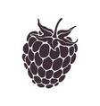 silhouette blackberry or raspberry fruit vector image