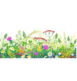 summer meadow plants seamless border vector image vector image