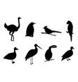 silhouette birds set vector image