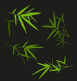 bamboo leaf set vector image