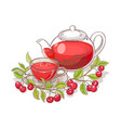 cherry tea vector image vector image