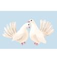 couple white doves vector image