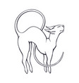 hand drawn doodle stretching sphinx cat vector image