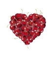 heart from cherry vector image vector image
