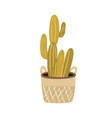 interior cactus in pot cacti growing in wicker vector image vector image