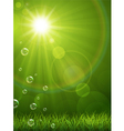 Summer green background vector image vector image