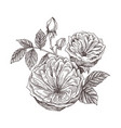 wild roses blossom branch isolated on white vector image vector image