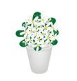 Beautiful Hydrangea Flower in A Flowerpot vector image vector image