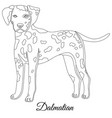 dalmatian dog outline vector image