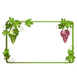 frame with ripe grapes vector image vector image