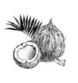 hand drawn coconut with half and leaves vector image
