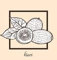 hand drawn kiwi vector image vector image