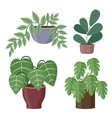 set house plants on a white background vector image