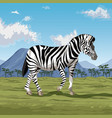 zebra on savannah vector image vector image