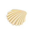 flat icon of scallop healthy and delicious vector image vector image