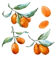 Watercolor tangerine vector image vector image