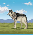 wolf in the valley vector image vector image
