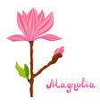 cartoon magnolia spring flower vector image vector image