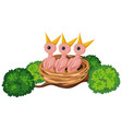 hungry chicks on nest vector image vector image