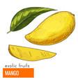 mango color vector image vector image